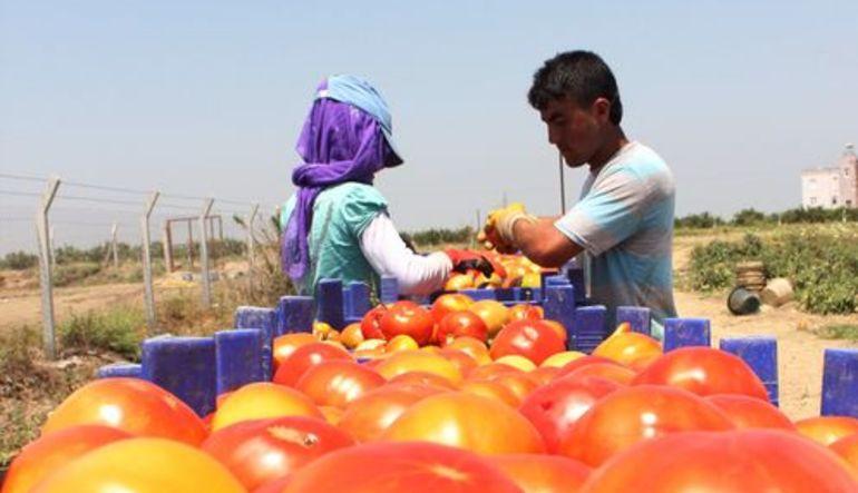 Tarım ÜFE Ocak'ta yüzde 8,99 arttı