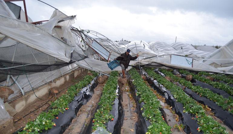 Tarım sigortalarında hedef %16