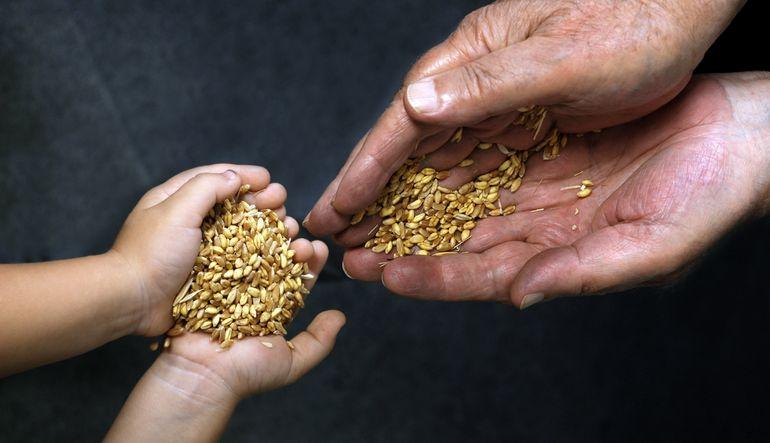 Gıda güvenliğinin teminatı tohumlara bağlı