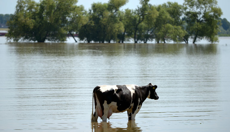Doğal afetlerin faturası tarıma çıktı