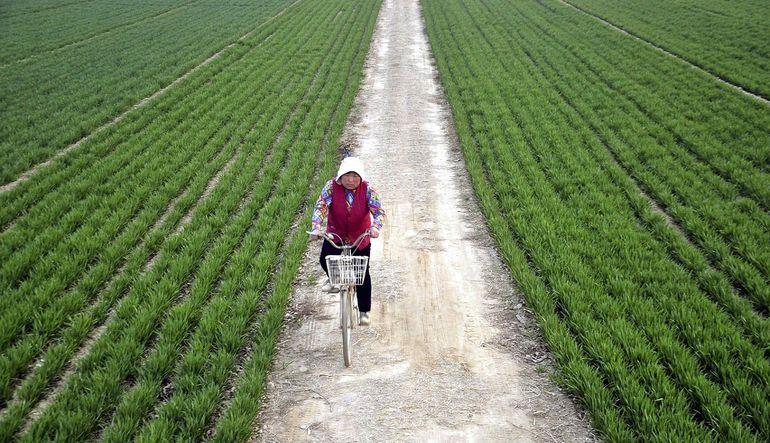 Analiz: Tarımda Çin etkisi