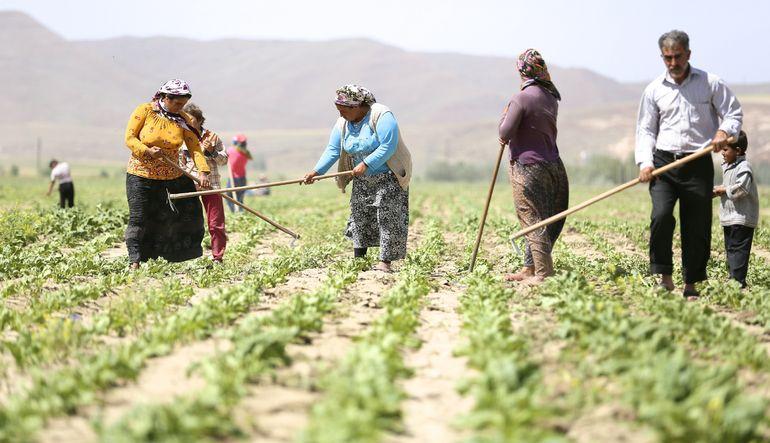 Analiz- Tarım işçilerinin sorunları