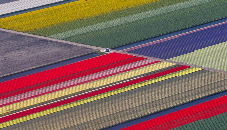 Tarımda Hollanda mucizesi