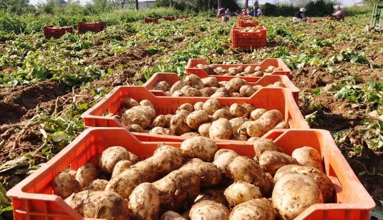 Patates fiyatları düşüşe geçti