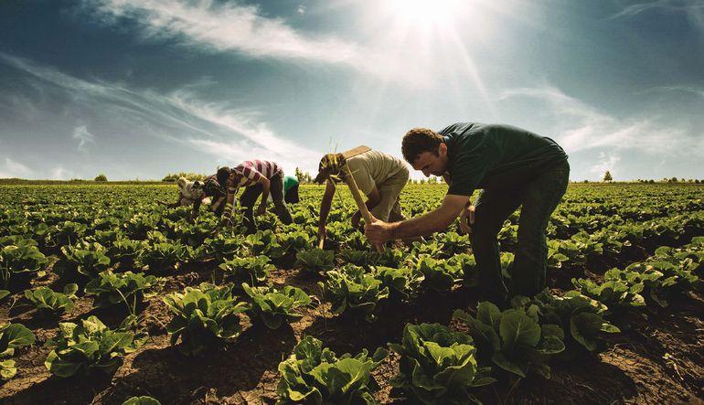 Türkiye'nin tarım tablosu