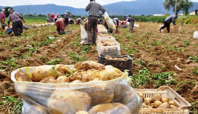 Patatese devlet incelemesi