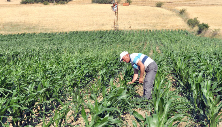 Çiftçiye şartlı destek