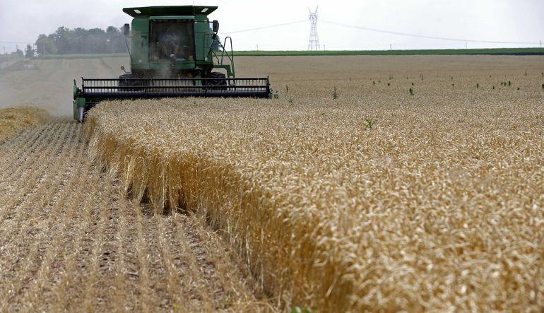 Küresel gıda fiyatları düşüşte