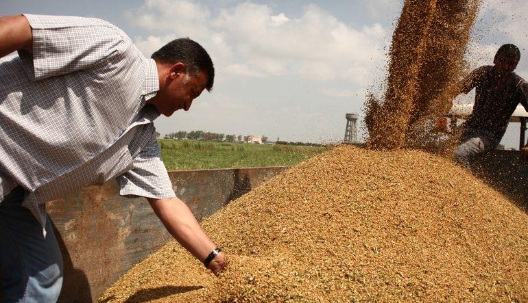 Arınç, buğday alım fiyatını açıkladı