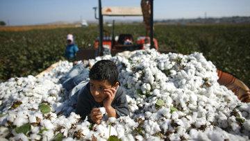 Ambargolardan Milli Tarım'a 2016'da Türkiye tarımı