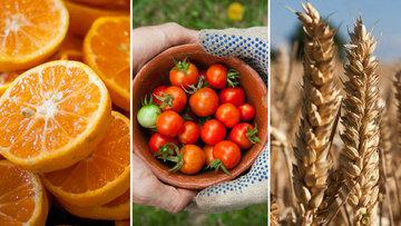 Türk-Rus ilişkilerinin 3 bilinmeyenli denklemi: Portakal, domates, tahıl