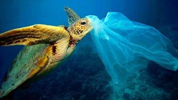 Plastik poşete yasak yok ücret var