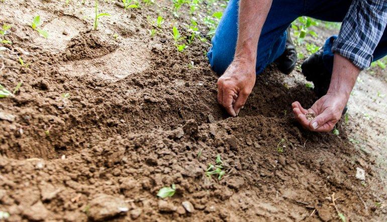Tarımda çiftçi-bankacı işbirliği