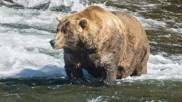 Türk Lirası'nın 'müzmin ayısı' bugünlere ne diyor?
