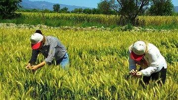 Tarım Kredi yurt dışından borçlanacak