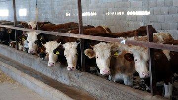 Tarım Bakanı: Üretici mağdur olursa vergileri yükseltiriz