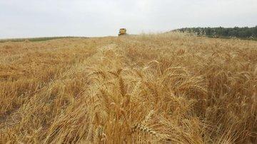 Çiftçiden uyarı: Hububat piyasası bozuldu