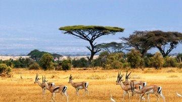 Afrika'ya ihracatta yeni dönem