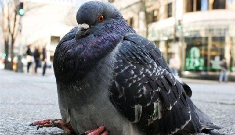 Fed güvercinleri susmuyor