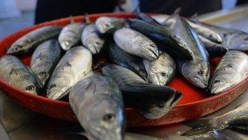 Balıkçının isyanı: Böyle kötü sene görmedik