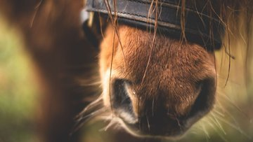 Tahvil piyasasının sürpriz atı