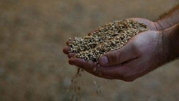 Türkiye'ye Bitcoin ile buğday