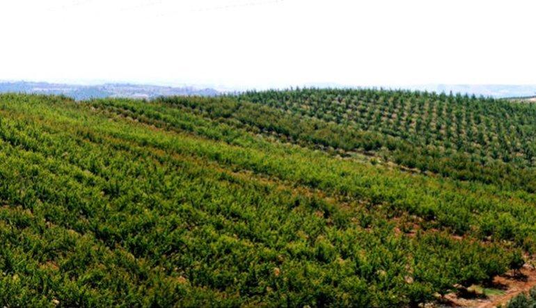 Tekfen'in meyve yatırımına onay