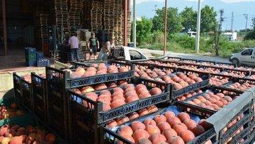 Gıda enflasyonuyla mücadelede taşıma adımı