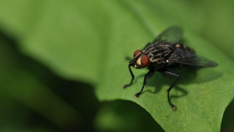 Soyu tükenen sineklerden klimalı otoyollara 10 yanlış gelecek tahmini